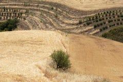 fields волнистое Стоковая Фотография