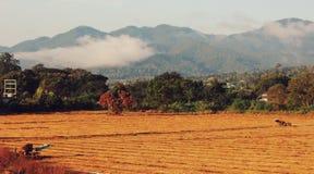 Fields гора Стоковые Фотографии RF