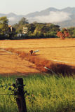 Fields гора Стоковое Фото