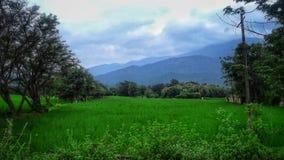 fields горы стоковые фото