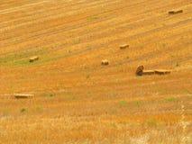 fields лето Стоковые Фотографии RF