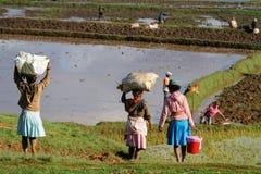 fields женщины стоковое фото rf
