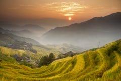 fields заход солнца terraced Стоковая Фотография