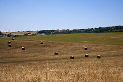fields зерно Стоковые Фотографии RF