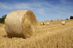 fields золотистое Стоковое фото RF