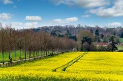fields золотистое Стоковые Изображения