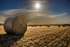 fields золото Стоковое Фото