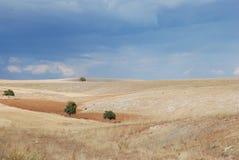fields индюк Стоковое фото RF