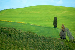 fields итальянка Стоковые Фото