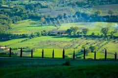 fields итальянка Стоковое Изображение RF