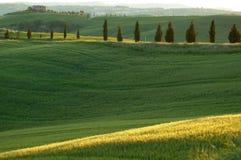 fields итальянка Стоковые Фотографии RF