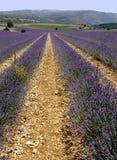 fields лаванда Провансаль франка Стоковая Фотография