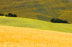 fields лето Италии стоковые фото