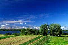 fields лето Стоковые Изображения
