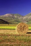 fields лето Стоковая Фотография RF