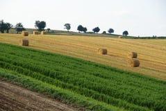 fields лето s стоковая фотография rf