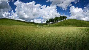 fields лужки Стоковые Фото