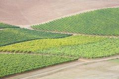 fields овощи Стоковая Фотография RF