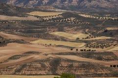 fields оливковые дерева стоковые фото