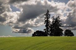 fields Орегон Стоковое Изображение
