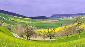fields дорога стоковая фотография rf