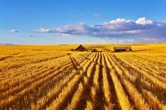 fields полдень Монтана стоковое фото rf