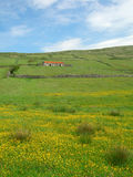 fields портрет Ирландии Стоковое Фото