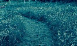 fields путь Стоковое Изображение RF