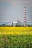fields рапс oilseed Стоковые Фото