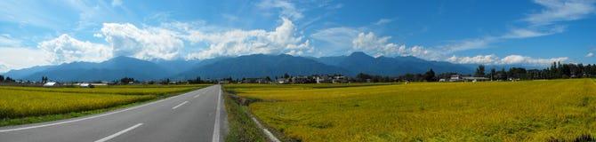 fields рис Вьетнам Стоковые Фотографии RF