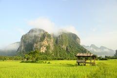 fields рис Стоковая Фотография
