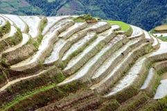 fields рис guilin longshan terraced Стоковая Фотография
