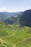 fields рис longji terraced Стоковое Изображение RF