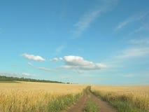 fields русский Стоковые Изображения