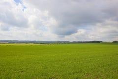 fields сценарная пшеница Стоковое Фото