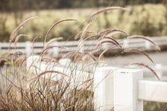 Fields луга Стоковые Фотографии RF