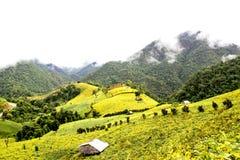 Fields фасоль сои на горах Стоковое Изображение
