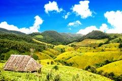 Fields фасоль сои на горах стоковое изображение rf
