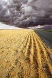 fields дорога сельская к Стоковое фото RF
