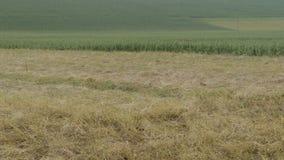 fields Lizenzfreie Stockbilder