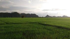 взгляды зеленых рисовых посадок стоковая фотография rf