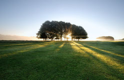 Fields. Image of Beams of light pour through the trees Stock Photos