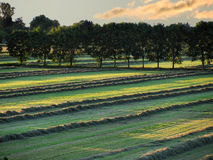 Fields Royalty Free Stock Photography