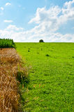 Fields Royalty Free Stock Photo