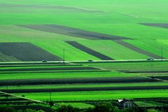 Fields. Many large fields, all green Royalty Free Stock Image