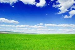 Fields. Green fields and blue sky Royalty Free Stock Images
