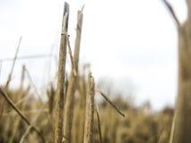 fields Lizenzfreie Stockfotografie