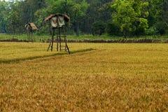fields Stockfotos