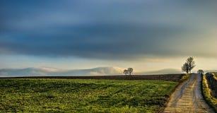 fields Stockbilder