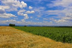 Fields against a blue sky. Showing an interesting cloudscape Stock Photography